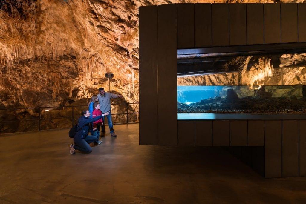 Postojnska jama-Iztok medja za PJ 2