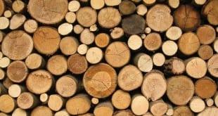 Leseni hlodi